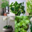 15-plants-that-are-lucky-and-good-for-the-home