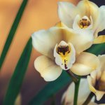 Do-Orchids-Die-Due-To-Direct-Sunlight-–-Light-Requirements-Guide