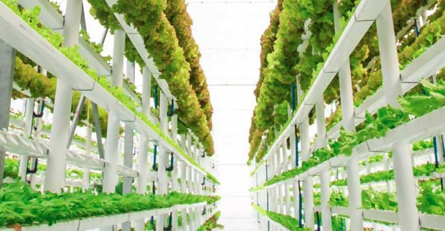 How-Does-Aeroponic-Vertical-Farming-Work