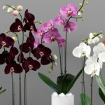 How-Long-Can-An-Orchid-Live